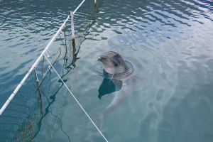 dolphins-07-c-japhy_at_flickr